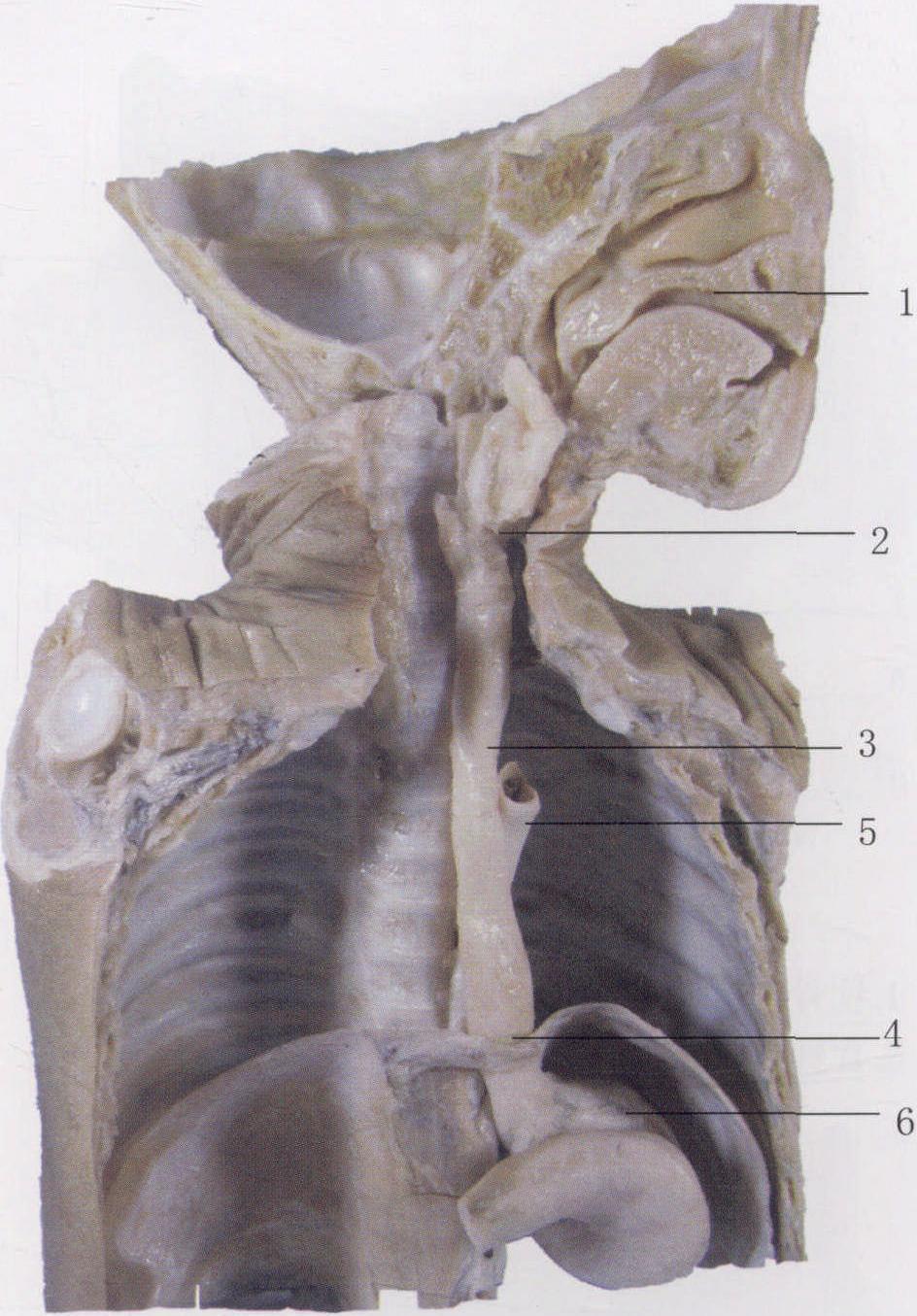 口腔正面结构图